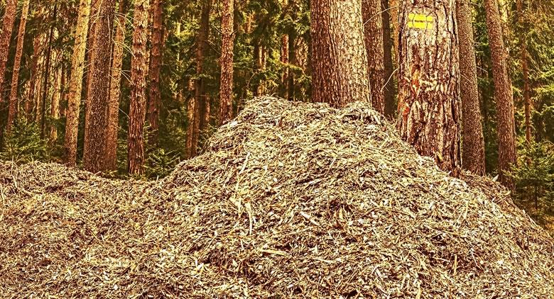Biomass Production